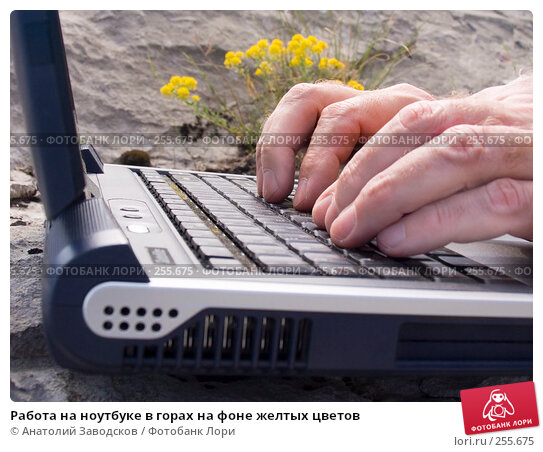 Работа на ноутбуке в горах на фоне желтых цветов, фото № 255675, снято 22 мая 2006 г. (c) Анатолий Заводсков / Фотобанк Лори