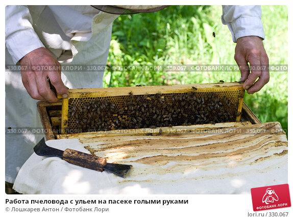 Работа пчеловода с ульем на пасеке голыми руками, фото № 330067, снято 25 сентября 2017 г. (c) Лошкарев Антон / Фотобанк Лори