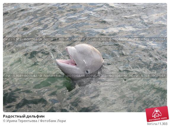 Радостный дельфин, эксклюзивное фото № 1303, снято 15 сентября 2005 г. (c) Ирина Терентьева / Фотобанк Лори