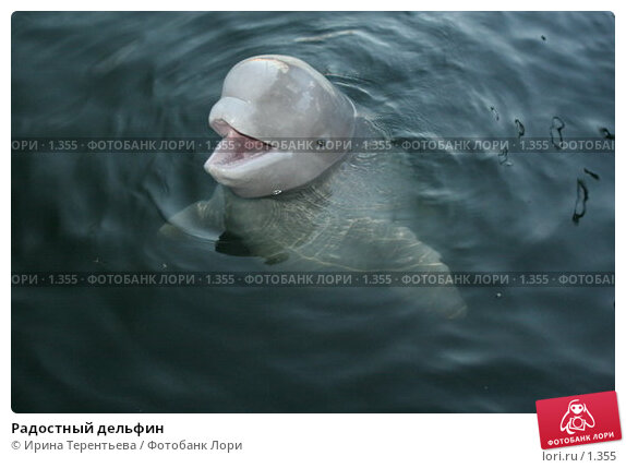 Радостный дельфин, эксклюзивное фото № 1355, снято 15 сентября 2005 г. (c) Ирина Терентьева / Фотобанк Лори