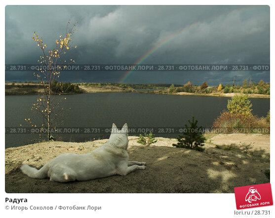 Радуга, фото № 28731, снято 8 октября 2006 г. (c) Игорь Соколов / Фотобанк Лори