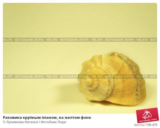Раковина крупным планом, на желтом фоне, фото № 195475, снято 22 июля 2017 г. (c) Лукиянова Наталья / Фотобанк Лори