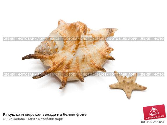 Купить «Ракушка и морская звезда на белом фоне», фото № 256051, снято 15 апреля 2008 г. (c) Биржанова Юлия / Фотобанк Лори