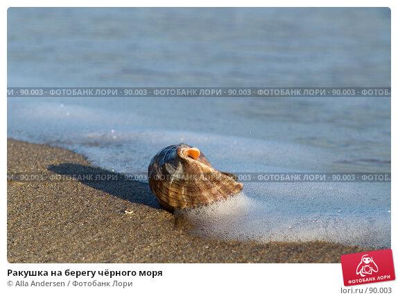 Ракушка на берегу чёрного моря, фото № 90003, снято 11 декабря 2005 г. (c) Alla Andersen / Фотобанк Лори