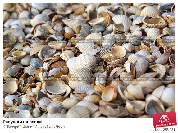 Ракушки на пляже, фото № 253931, снято 26 сентября 2007 г. (c) Валерий Шанин / Фотобанк Лори
