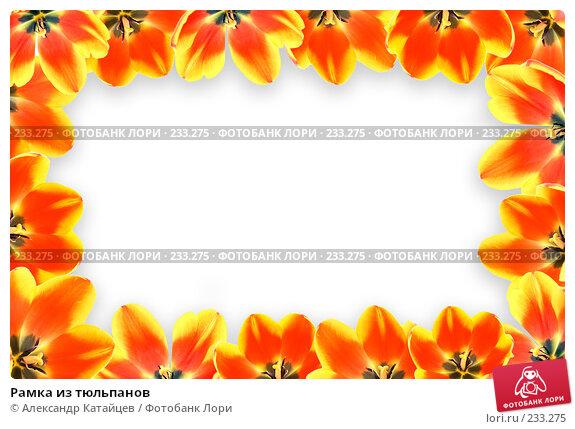 Рамка из тюльпанов, фото № 233275, снято 1 марта 2008 г. (c) Александр Катайцев / Фотобанк Лори