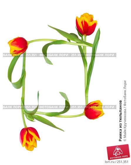 Рамка из тюльпанов, фото № 251351, снято 26 мая 2017 г. (c) Майя Крученкова / Фотобанк Лори