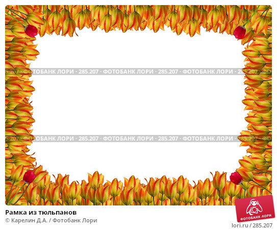 Купить «Рамка из тюльпанов», иллюстрация № 285207 (c) Карелин Д.А. / Фотобанк Лори