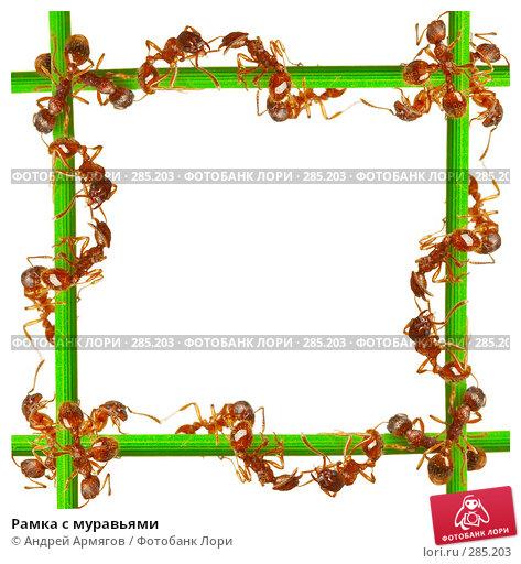 Рамка с муравьями, фото № 285203, снято 14 июня 2007 г. (c) Андрей Армягов / Фотобанк Лори