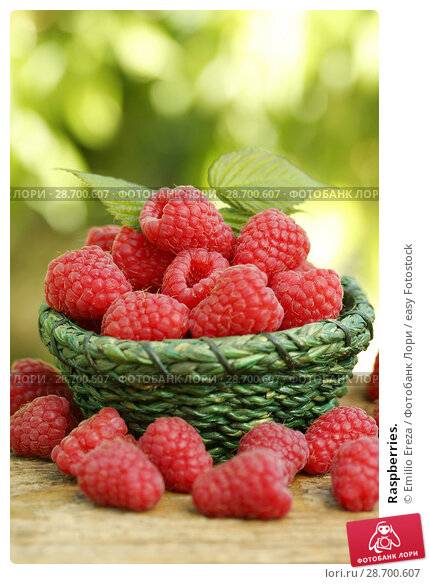 Купить «Raspberries.», фото № 28700607, снято 19 июня 2018 г. (c) easy Fotostock / Фотобанк Лори