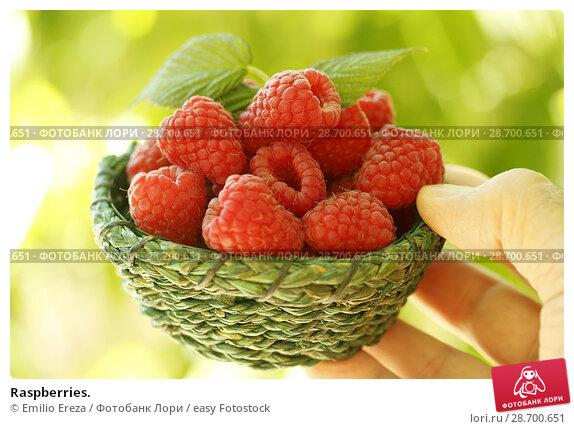 Купить «Raspberries.», фото № 28700651, снято 19 июня 2018 г. (c) easy Fotostock / Фотобанк Лори