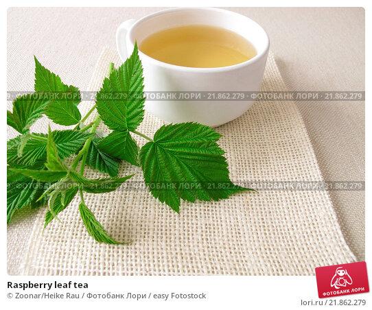 Raspberry leaf tea. Стоковое фото, фотограф Zoonar/Heike Rau / easy Fotostock / Фотобанк Лори