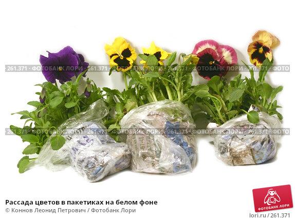 Рассада цветов в пакетиках на белом фоне, фото № 261371, снято 24 апреля 2008 г. (c) Коннов Леонид Петрович / Фотобанк Лори