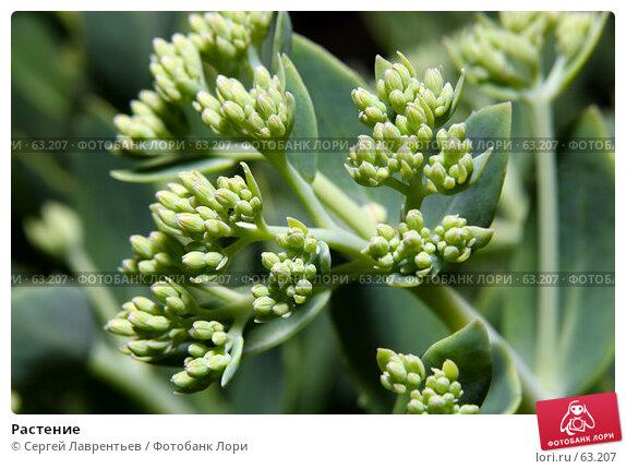 Купить «Растение», фото № 63207, снято 12 июля 2007 г. (c) Сергей Лаврентьев / Фотобанк Лори