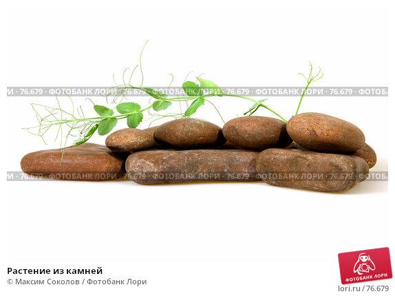 Купить «Растение из камней», фото № 76679, снято 23 июля 2007 г. (c) Максим Соколов / Фотобанк Лори