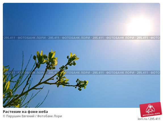 Растение на фоне неба, фото № 295411, снято 20 января 2017 г. (c) Парушин Евгений / Фотобанк Лори