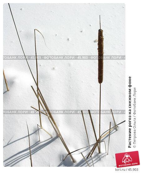 Купить «Растение рогоз на снежном фоне», фото № 45903, снято 25 февраля 2007 г. (c) Петрова Ольга / Фотобанк Лори