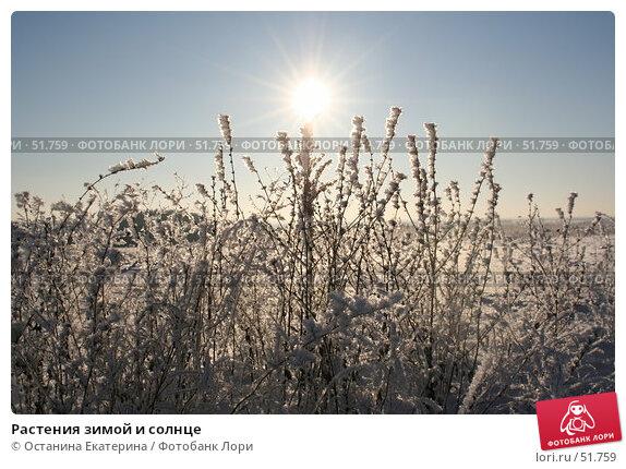 Растения зимой и солнце, фото № 51759, снято 29 ноября 2006 г. (c) Останина Екатерина / Фотобанк Лори