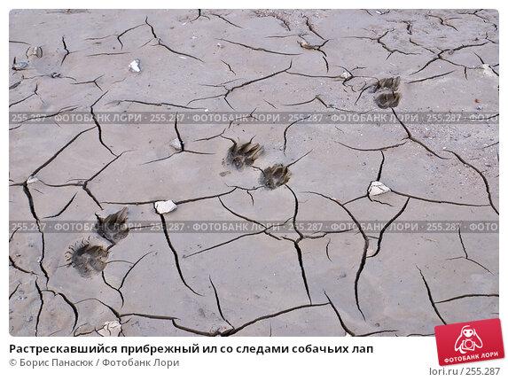 Растрескавшийся прибрежный ил со следами собачьих лап, фото № 255287, снято 29 марта 2008 г. (c) Борис Панасюк / Фотобанк Лори