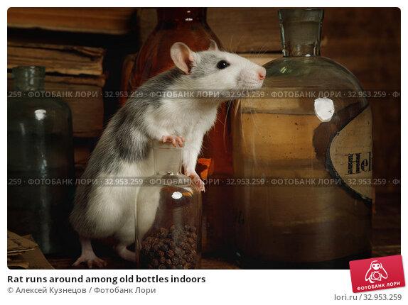 Rat runs around among old bottles indoors. Стоковое фото, фотограф Алексей Кузнецов / Фотобанк Лори