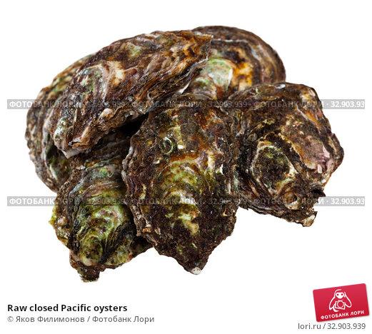 Raw closed Pacific oysters. Стоковое фото, фотограф Яков Филимонов / Фотобанк Лори
