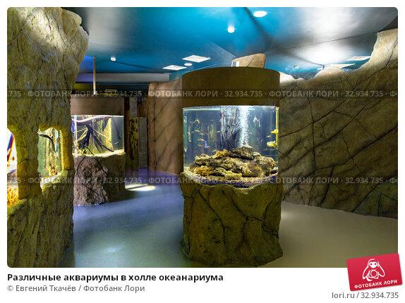 Купить «Различные аквариумы в холле океанариума», фото № 32934735, снято 21 декабря 2019 г. (c) Евгений Ткачёв / Фотобанк Лори