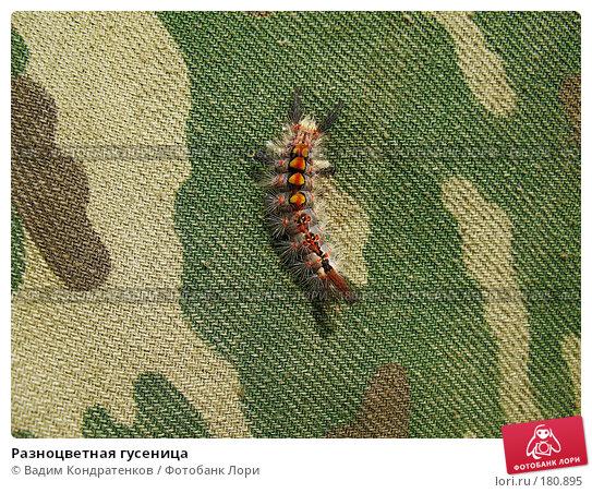 Разноцветная гусеница, фото № 180895, снято 17 января 2017 г. (c) Вадим Кондратенков / Фотобанк Лори