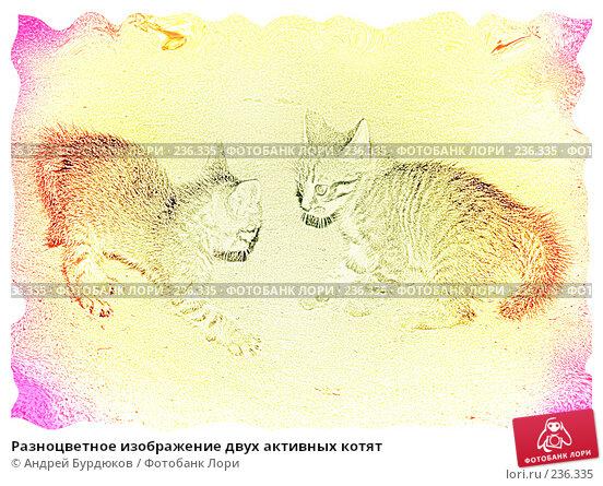 Разноцветное изображение двух активных котят, фото № 236335, снято 24 июня 2006 г. (c) Андрей Бурдюков / Фотобанк Лори