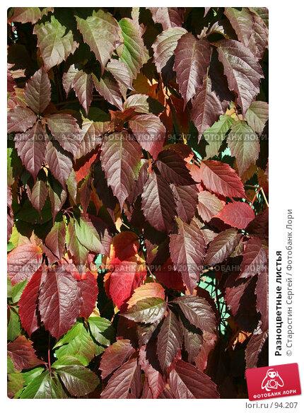Разноцветные листья, фото № 94207, снято 30 сентября 2007 г. (c) Старостин Сергей / Фотобанк Лори