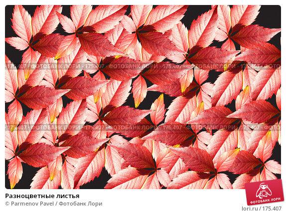 Разноцветные листья, фото № 175407, снято 11 января 2008 г. (c) Parmenov Pavel / Фотобанк Лори