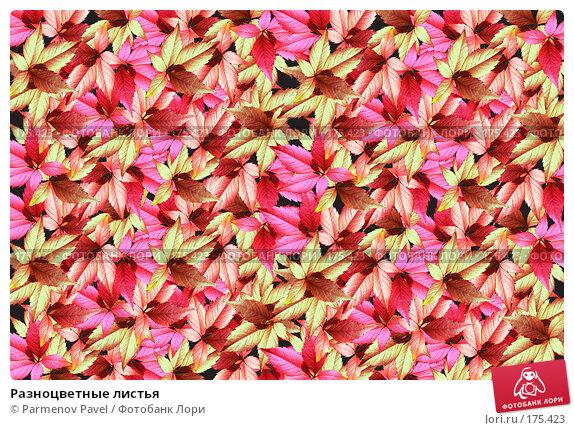 Разноцветные листья, фото № 175423, снято 11 января 2008 г. (c) Parmenov Pavel / Фотобанк Лори