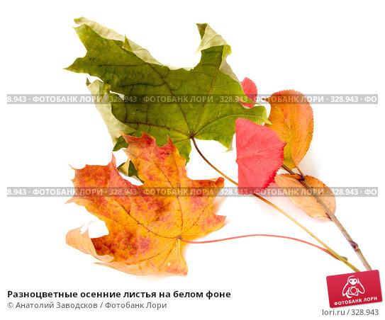 Разноцветные осенние листья на белом фоне, фото № 328943, снято 6 февраля 2007 г. (c) Анатолий Заводсков / Фотобанк Лори