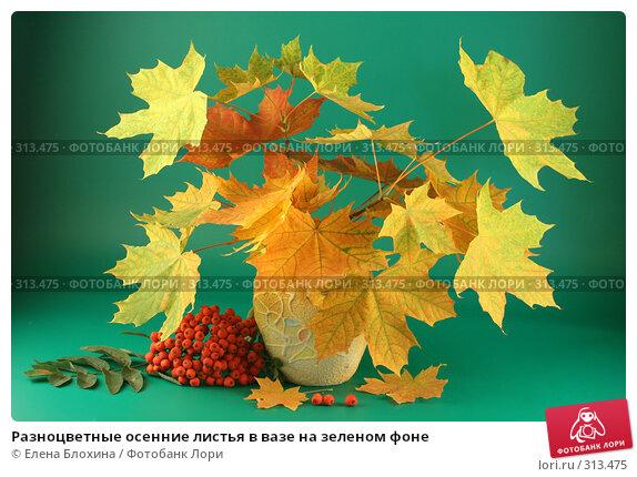 Купить «Разноцветные осенние листья в вазе на зеленом фоне», фото № 313475, снято 12 сентября 2007 г. (c) Елена Блохина / Фотобанк Лори