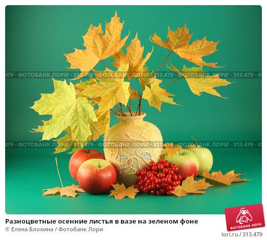 Разноцветные осенние листья в вазе на зеленом фоне, фото № 313479, снято 12 сентября 2007 г. (c) Елена Блохина / Фотобанк Лори