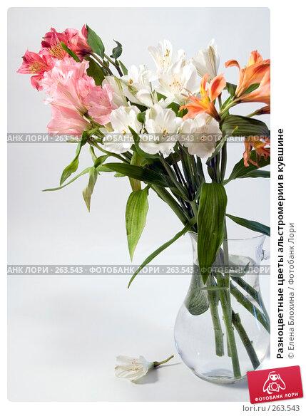 Купить «Разноцветные цветы альстромерии в кувшине», фото № 263543, снято 25 апреля 2008 г. (c) Елена Блохина / Фотобанк Лори