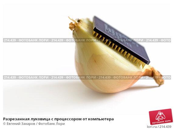 Купить «Разрезанная луковица с процессором от компьютера», эксклюзивное фото № 214439, снято 2 марта 2008 г. (c) Евгений Захаров / Фотобанк Лори