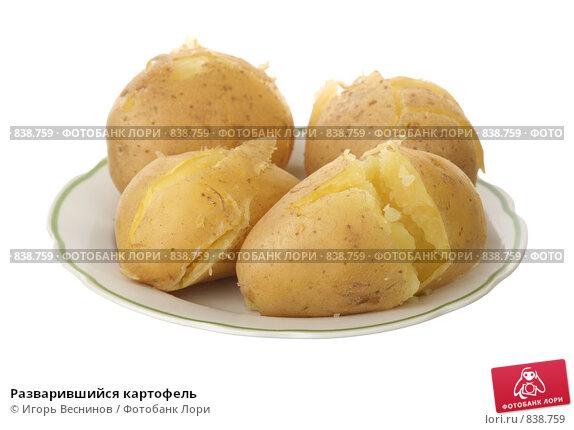 Купить «Разварившийся картофель», фото № 838759, снято 28 апреля 2009 г. (c) Игорь Веснинов / Фотобанк Лори