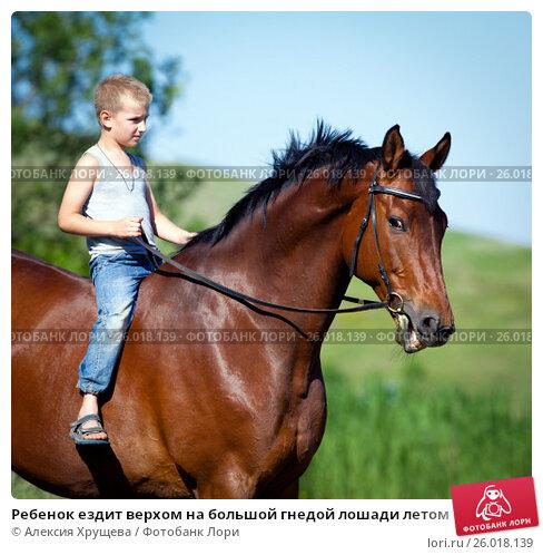 Ребенок ездит верхом на большой гнедой лошади летом, фото № 26018139, снято 23 июня 2017 г. (c) Melory / Фотобанк Лори