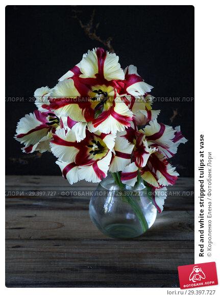 Купить «Red and white stripped tulips at vase», фото № 29397727, снято 14 марта 2013 г. (c) Короленко Елена / Фотобанк Лори