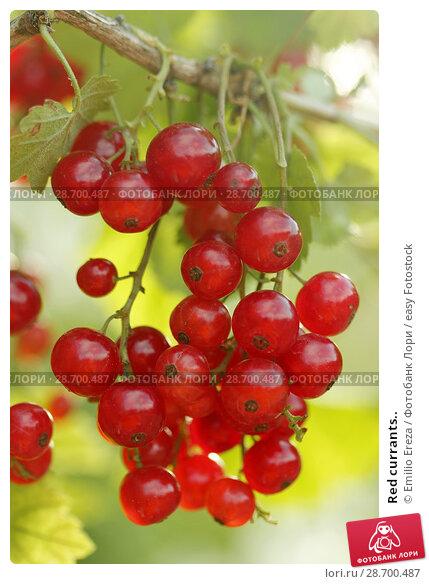 Купить «Red currants..», фото № 28700487, снято 15 июня 2018 г. (c) easy Fotostock / Фотобанк Лори