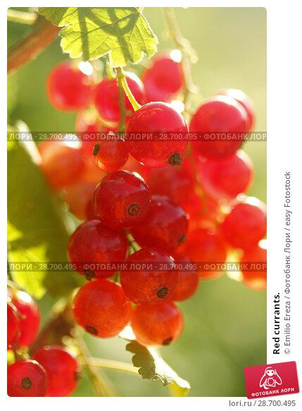 Купить «Red currants.», фото № 28700495, снято 15 июня 2018 г. (c) easy Fotostock / Фотобанк Лори