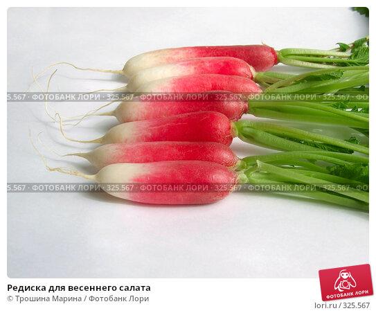 Редиска для весеннего салата, фото № 325567, снято 14 июня 2008 г. (c) Трошина Марина / Фотобанк Лори