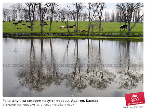 Река и луг, на котором пасутся коровы. Адыгея. Кавказ, фото № 255391, снято 6 апреля 2006 г. (c) Виктор Филиппович Погонцев / Фотобанк Лори