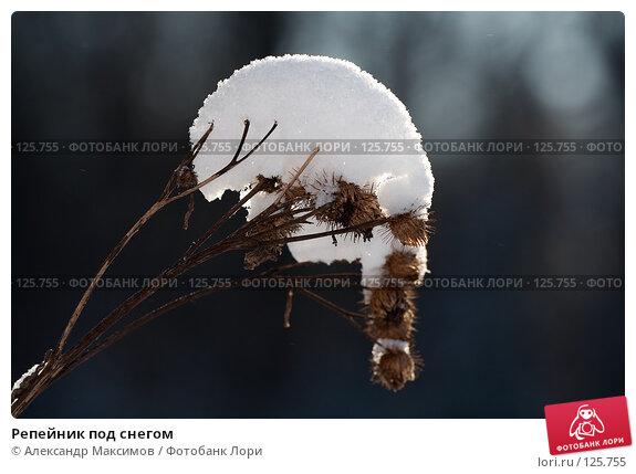 Купить «Репейник под снегом», фото № 125755, снято 11 февраля 2007 г. (c) Александр Максимов / Фотобанк Лори