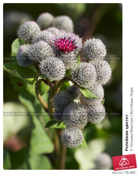 Купить «Репейник цветет», фото № 76495, снято 6 июля 2007 г. (c) Татьяна Макотра / Фотобанк Лори