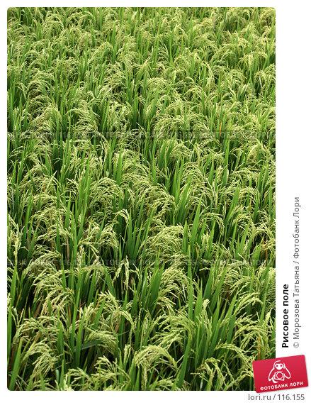 Рисовое поле, фото № 116155, снято 23 октября 2007 г. (c) Морозова Татьяна / Фотобанк Лори