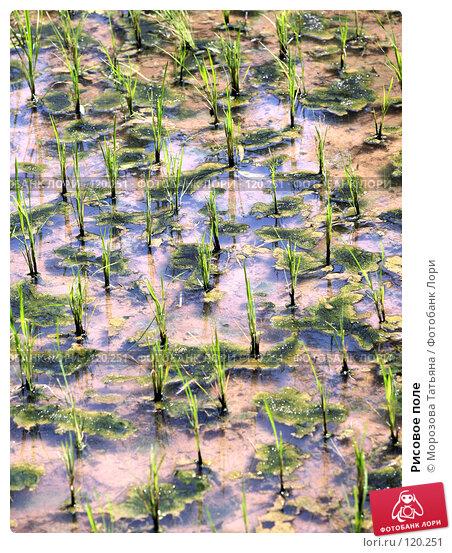 Рисовое поле, фото № 120251, снято 23 октября 2007 г. (c) Морозова Татьяна / Фотобанк Лори
