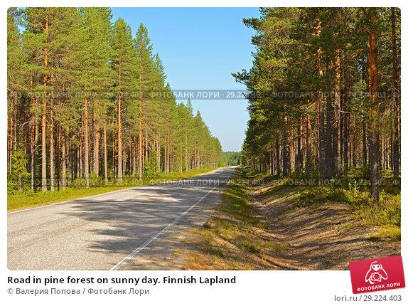 Купить «Road in pine forest on sunny day. Finnish Lapland», фото № 29224403, снято 16 июля 2018 г. (c) Валерия Попова / Фотобанк Лори