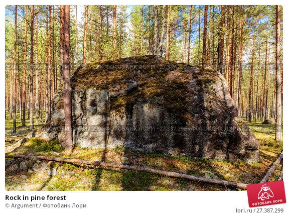 Купить «Rock in pine forest», фото № 27387299, снято 6 сентября 2014 г. (c) Argument / Фотобанк Лори