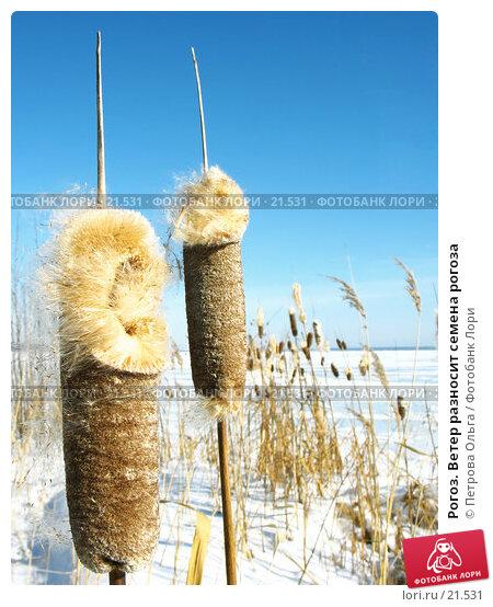 Рогоз. Ветер разносит семена рогоза, фото № 21531, снято 27 февраля 2007 г. (c) Петрова Ольга / Фотобанк Лори